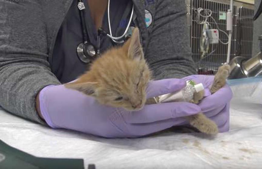 Кошка закопала слабого котёнка в грязь, но люди нашли его