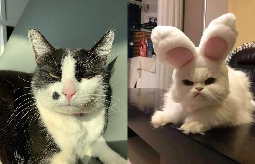 Опять меня разбудили... Самые смешные недовольные мордашки котов