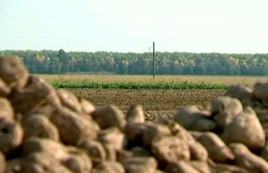 Президент поручил до 7 ноября завершить осенние сельхозработы