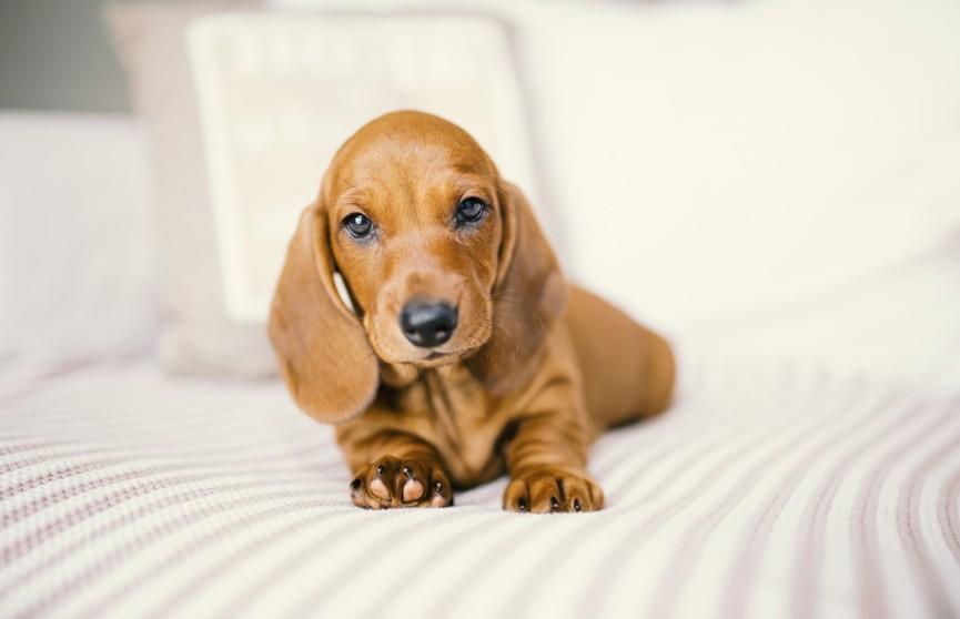 Пользователей интернета покорил щенок, который очень любит подремать на лежанке