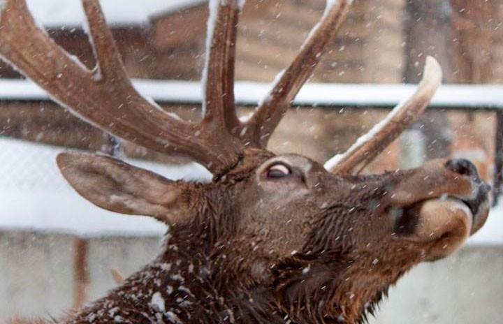 «Когда фотогеничность – твоё второе имя»: Челябинский зоопарк показал  забавные фото животных