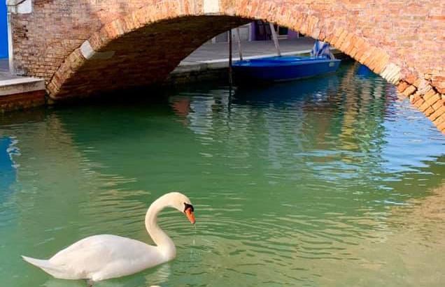 Карантин помог экологии: в каналы Венеции вернулась рыба, а вода стала чистой