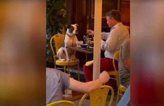 «И пусть весь мир подождет». Ужин мужчины и пса в ресторане умилил соцсети