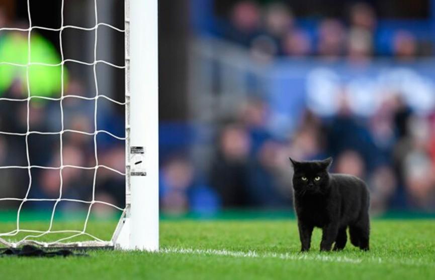 Чёрный кот выбежал на футбольное поле – и влюбил  в себя фанатов