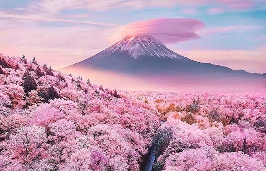 Необыкновенно теплая и ранняя весна обернулась аномально ранним сезоном цветения сакуры в Японии.