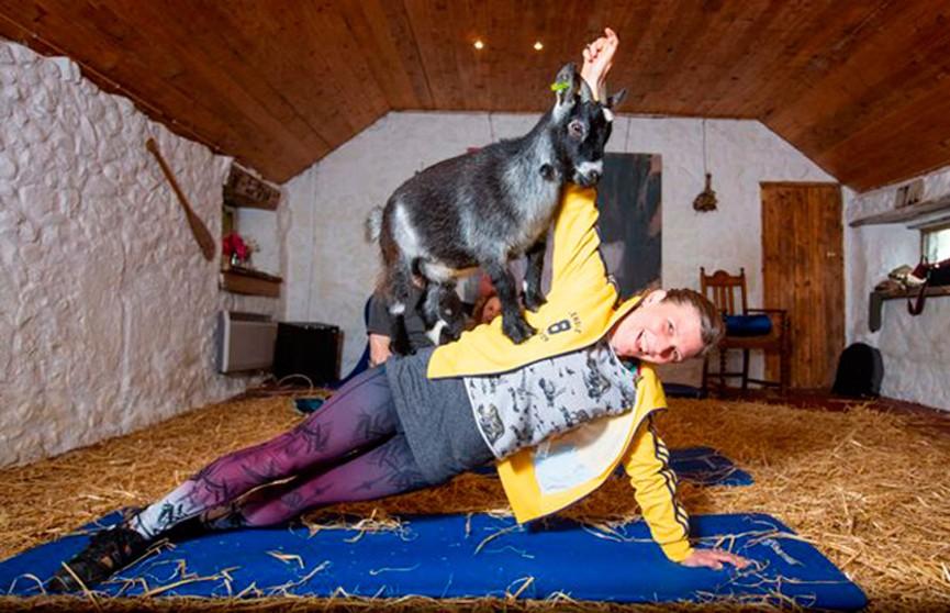 Пилатес с козлятами: в Шотландии открылся необычный фитнес-класс