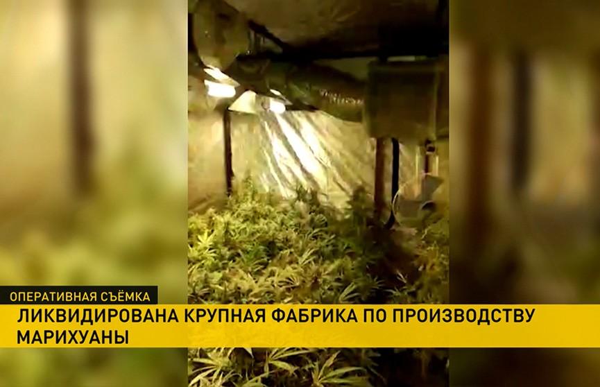Конспирация не помогла. Фабрику по выращиванию марихуаны ликвидировали в Минской области