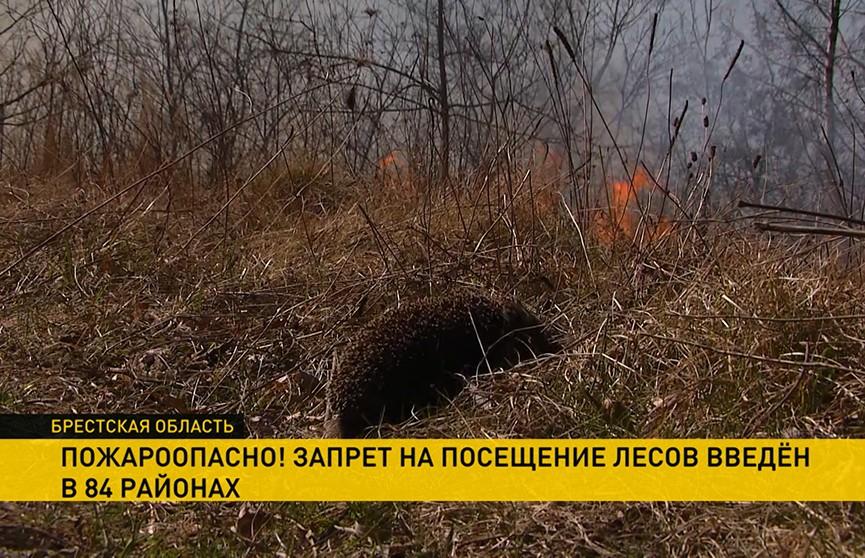 Лесные пожары на юге Беларуси: МЧС призывает не выжигать траву и не палить костры