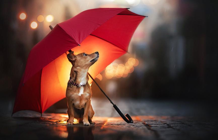 До +25°C и ливни с грозами: погода на 12 июля