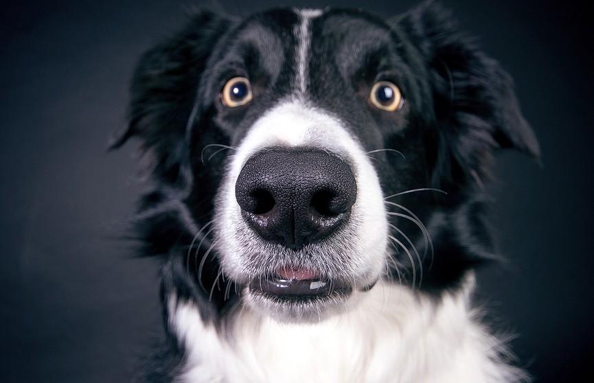 Реакция собаки на танцы хозяйки взорвала Сеть. Посмотрите!