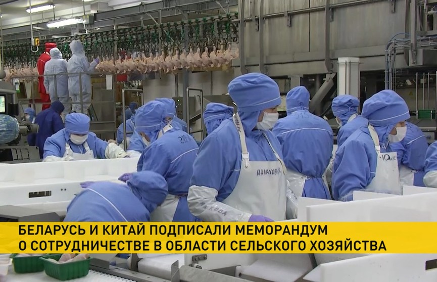 Беларусь и Китай подписали меморандум о стратегическом сотрудничестве в сельском хозяйстве