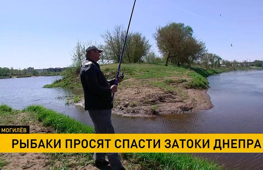 Ловить тут нечего! Почему Днепровские заводи превращаются в болото?