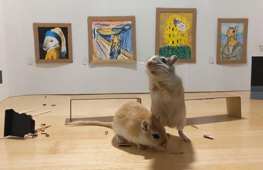 Британская пара построила маленькую картинную галерею для своих мышей