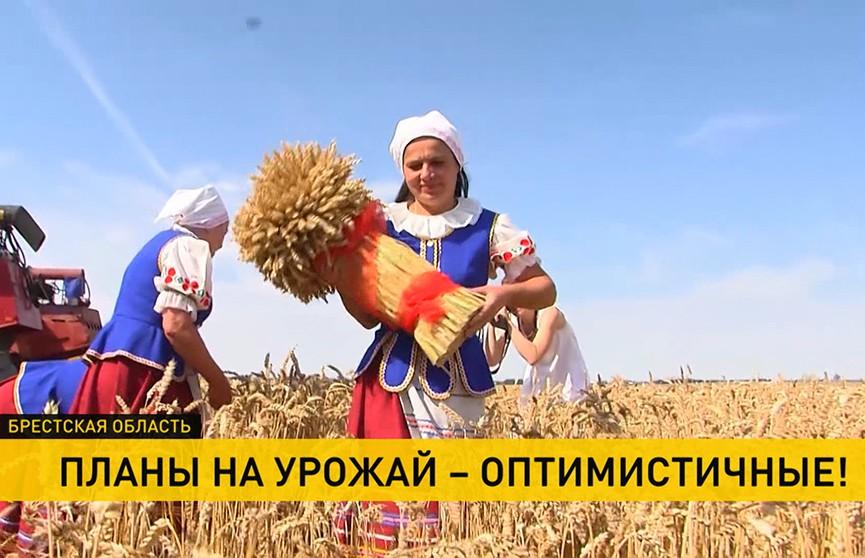 В крупнейшем хозяйстве Брестской области приступили к массовой уборке зерновых