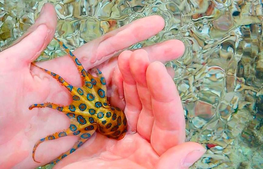 Женщина хотела сделать оригинальное фото с осьминогом, но сильно пострадала