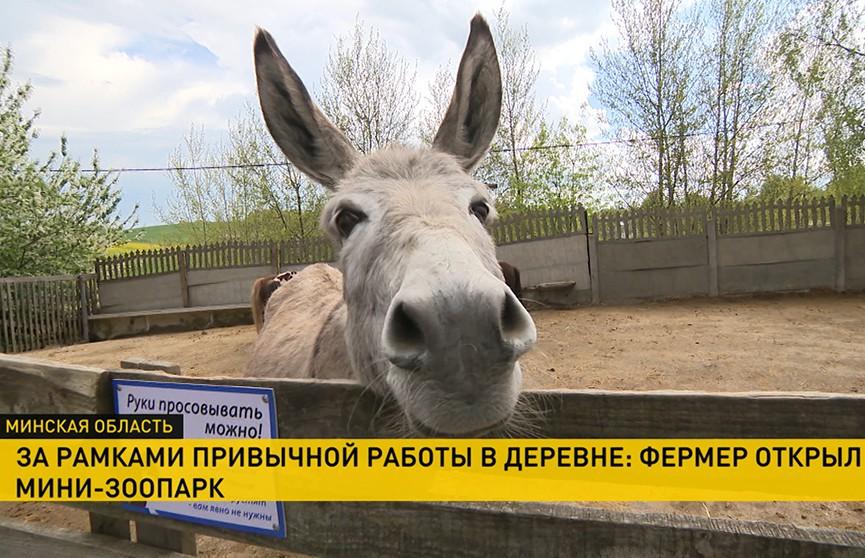 Белорусский фермер открыл контактный мини-зоопарк под Минском. Вам точно захочется там побывать!