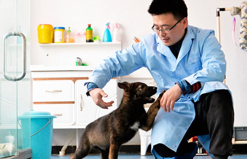 В Китае готовят клонированную собаку для службы в полиции