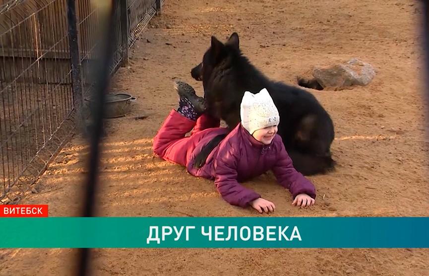 Девочка и волк: в Витебске пятилетний ребенок подружился с лесным хищником
