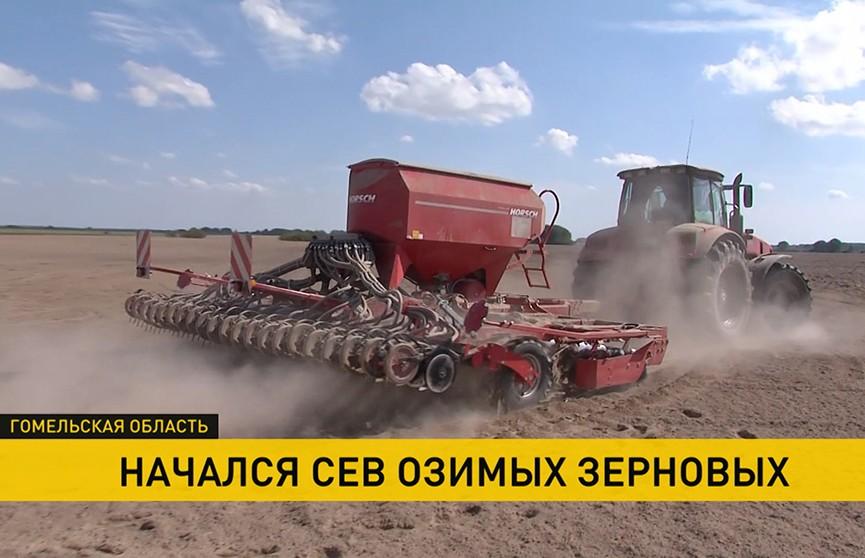 3,5% площадей зерновых и зернобобовых культур осталось убрать в Беларуси