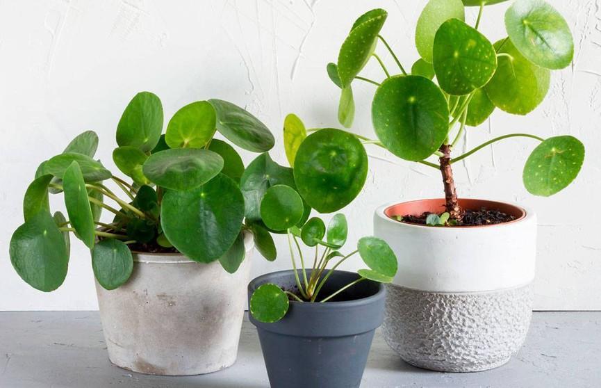 10 растений, которые принесут вам удачу и деньги! Срочно заведите у себя одно из них!
