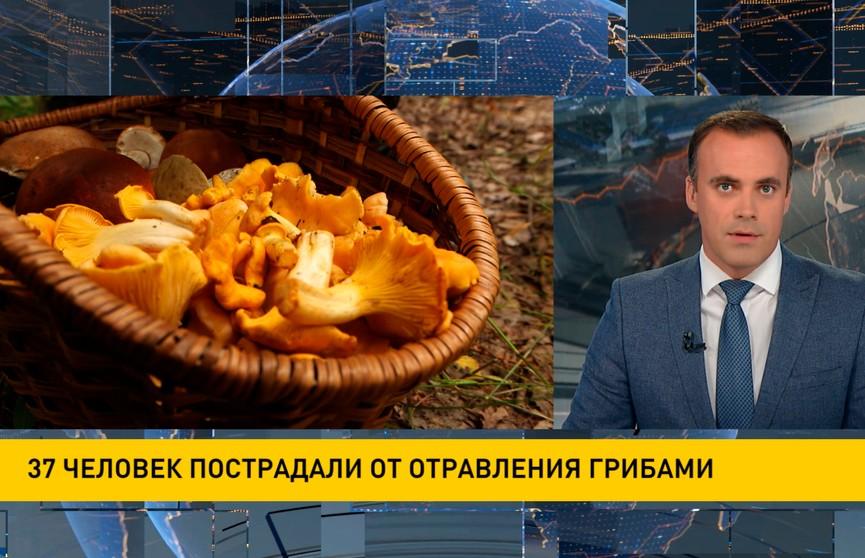 37 человек пострадали от отравления грибами в Беларуси с начала года