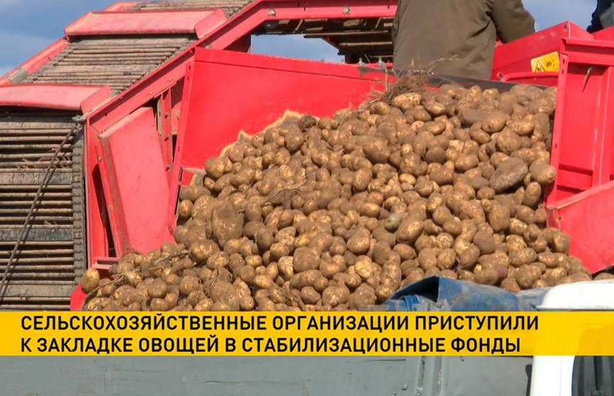 Аграрии убрали более 50% площадей картофеля и почти 1/3 площадей сахарной свёклы