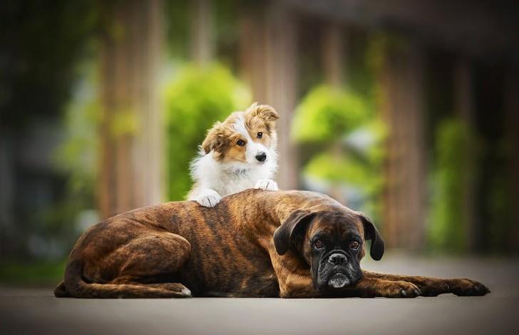 Видео, которое растрогает вас до глубины души: пес помог слепой собаке спуститься с лестницы