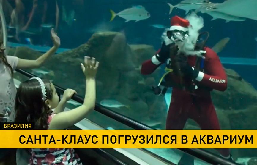 В Бразилии в одном из самых больших аквариумов появился Санта-Клаус