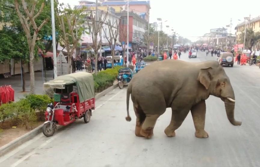 Cлон несколько часов разгуливал по дорогам города на юго-западе Китая: по пути повредило девять автомобилей
