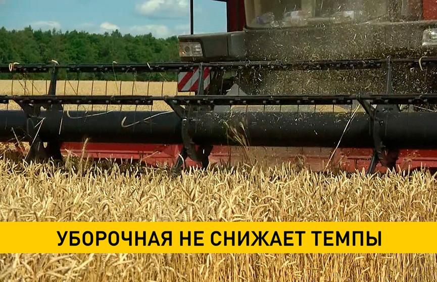 Уборочная-2021: аграрии собрали уже почти 2,5 млн тонн зерновых