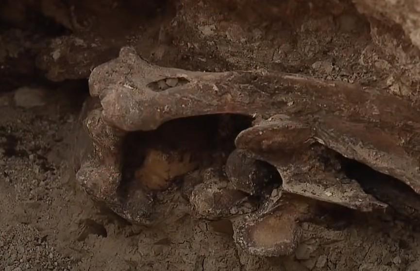 Мужчина решил сделать на заднем дворе бассейн, а выкопал древние кости