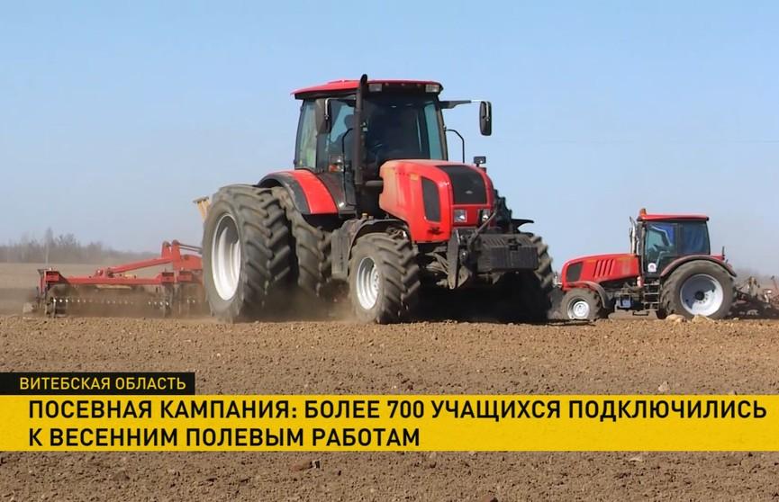 И практика, и возможность заработать! Как молодёжь помогает аграриям