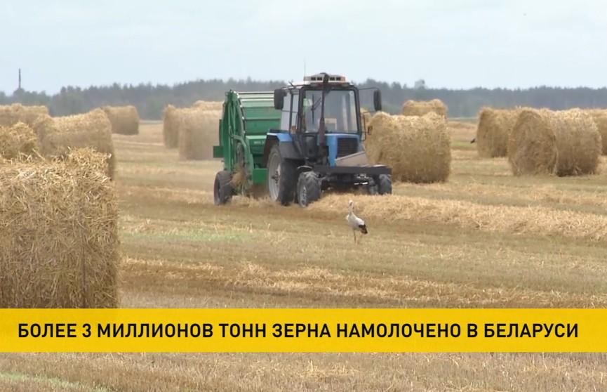 Уборочная-2020 в самом разгаре: по темпам работ в лидерах – юг Беларуси