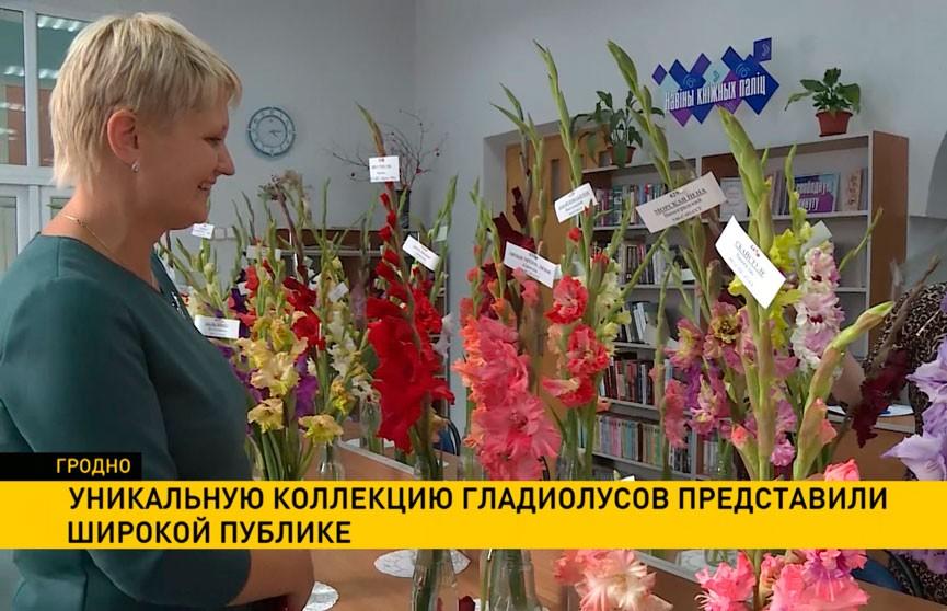 Уникальную частную коллекцию гладиолусов представили широкой публике в Гродно