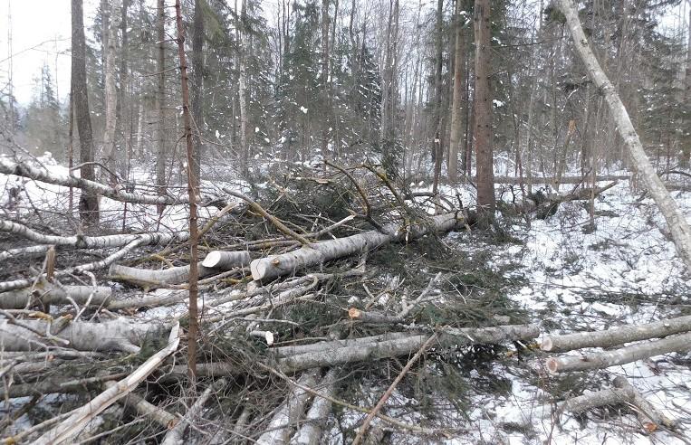 Вальщик леса погиб в Сенненском районе