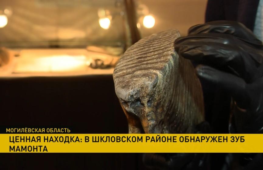 Зуб мамонта обнаружили рабочие в Шкловском районе