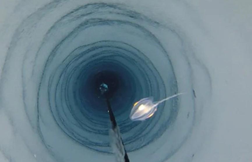 Во льдах Антарктиды нашли неизвестных животных