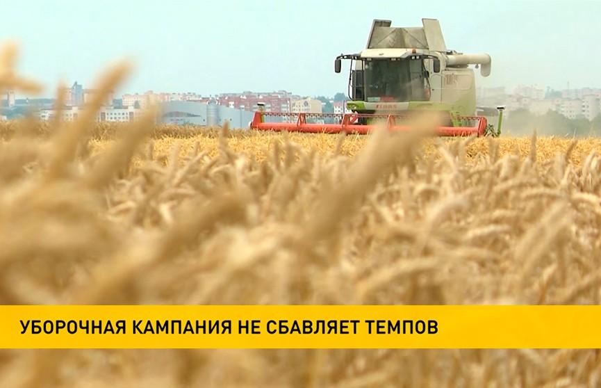 Уборочная-2021: урожай собрали с трети площадей