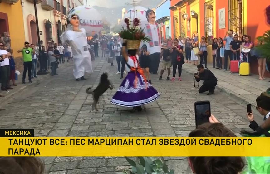 Танцующий пёс стал звездой свадебного парада в Мексике