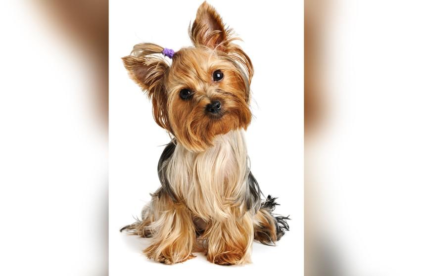 Мужчина спрятался в шкафу от жены, но собака его сдала и до слез насмешила интернет (ВИДЕО)