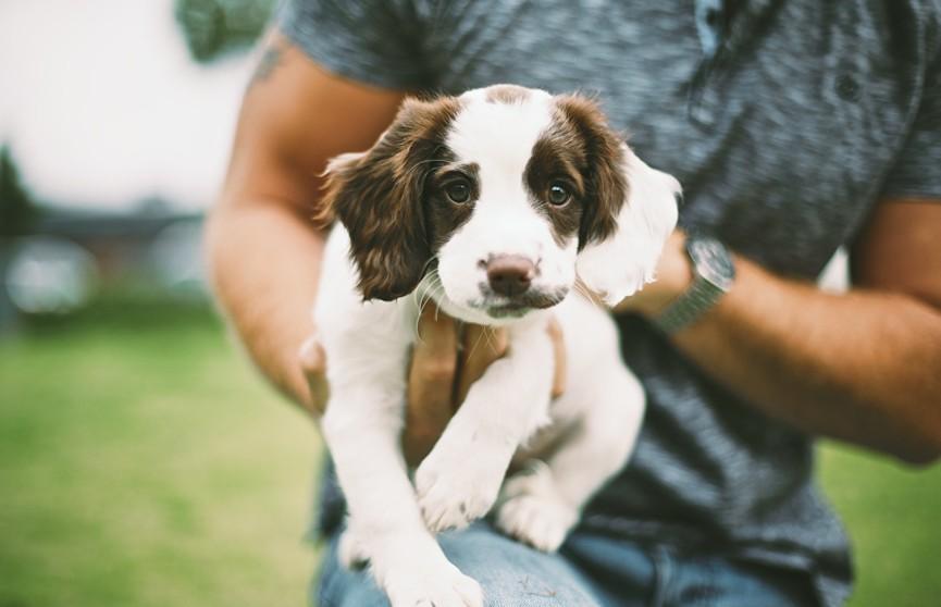 Ученые выявили пользу собак в борьбе с сердечными заболеваниями