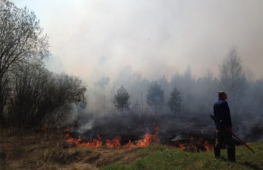 Пожар охватил 300 гектар леса под Наровлей