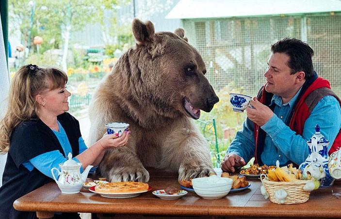 Наглый медведь забрал у туристов шашлык  (ВИДЕО)