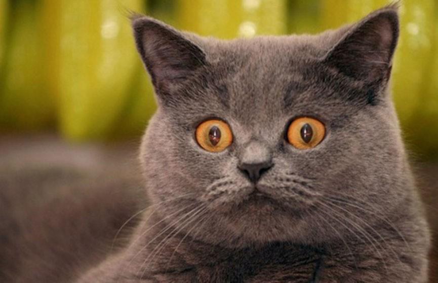 Ужас и смятение. Посмотрите, как домашние питомцы отреагировали на кошачьи фильтры (ВИДЕО)