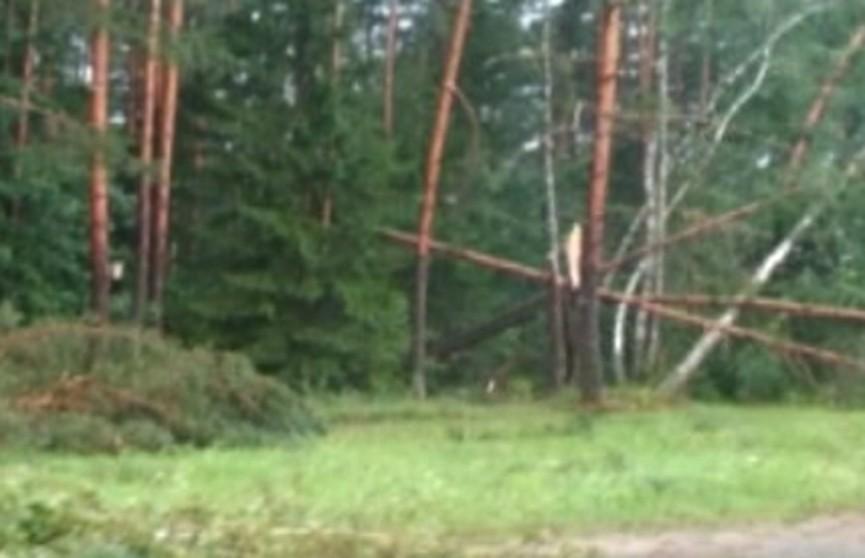 Последствия мощного урагана устраняют в Островецком районе