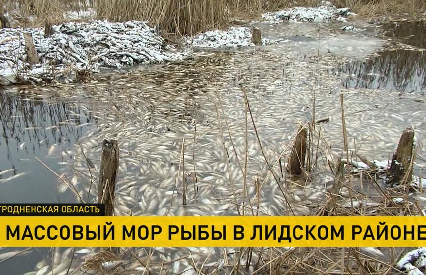 Массовый мор рыбы в Гродненской области: сотни мёртвых тушек лежат по берегам канала