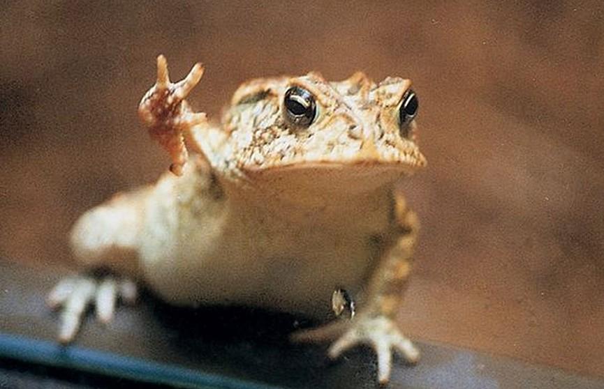 Очаровательная жаба Тоби покорила Интернет! Видео