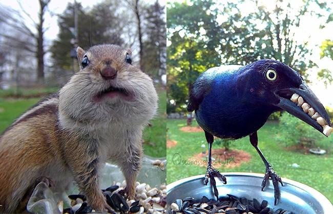 Девушка установила камеру возле кормушки и показала, как себя ведут птицы и зверьки. Они украдут ваше сердечко!