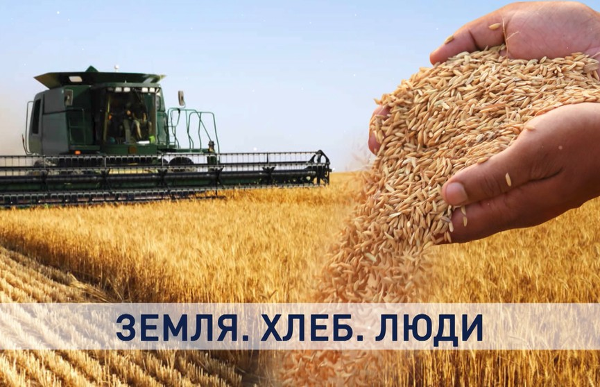 Истории тех, кто кормит всю страну. Репортаж с полей