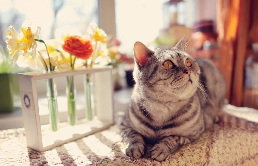 Кот слушался хозяина во время мытья и даже отвечал на его вопросы. Посмотрите – пушистик поразительно терпеливый! (ВИДЕО)